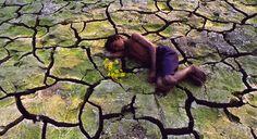 Estudos sobre mudanças climáticas   ESCOLHA VERDE