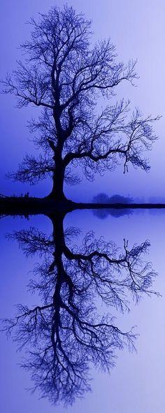 Tree Skeleton Reflection