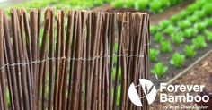 Willow fence panels are an attractive addition to any yard or garden, lending a quaint and inviting air reminiscent of the English countrysid Willow Fence Panels, Bamboo Fence, Bamboo Products, Yard, Small Animals, Fencing, Blog, Garten, Blogging