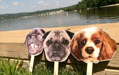 DIY: How to Take Your Dog Everywhere --> must make a Murphy head-on-a-stick for our wedding photo booth!!!