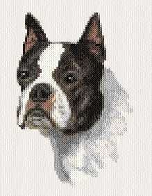 Boston Terrier - cross stitch pattern designed by Marv Schier. Category: Dogs.