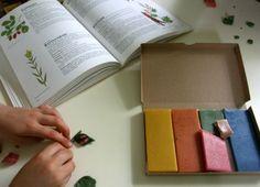 making beeswax models of favorite herbs.