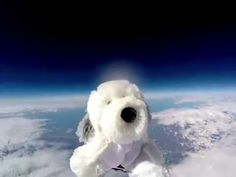 A toy dog named Sam went into space, and now he's missing | fox8.com