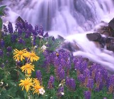 """Colorado Wildflowers - Photo.net Nature Forum  """"Kind hearts are the gardens, Kind thoughts are the roots, Kind words are the flowers, Kind deeds are the fruits, Take care of your garden And keep out the weeds, Fill it with sunshine, Kind words, and Kind deeds.""""  Henry Wadsworth Longfellow"""