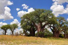 Nxai Pan National Park in Botswana