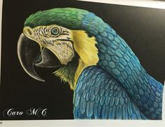 Macaw Page 27 By Caro M