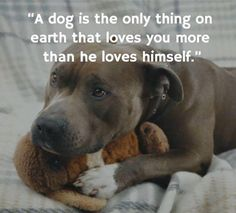 "Why not replace the word ""thing"" withthe saying ""THE ONLY ONE""_I am 100% sure that most people agree with me that a dog is NOT a thing !"