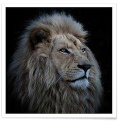 Proud Lion - Louise Wolbergs als Premium poster door 1x   JUNIQE shop