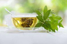 Chá verde reduz gordura corporal; veja outros benefícios