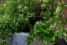 Jak uprawiać zioła w skrzynkach?