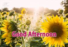 May your afternoon be as bright the flowers Good Afternoon Quotes, Good Morning Sunshine, Good Morning Good Night, Good Night Quotes, Night Wishes, Wishes Images, E Cards, Buddha Meditation, Verses