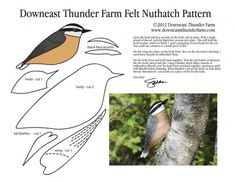 nuthatch felt pattern Stuffed Animal Pattern How to Make a Toy Animal Plushie Tu. nuthatch felt pattern Stuffed Animal Pattern How to Make a Toy Animal Plushie Tutorial Plushies Tut Bird Crafts, Animal Crafts, Felt Crafts, Sewing Stuffed Animals, Stuffed Animal Patterns, Felt Patterns, Bird Patterns, Bird Template, Crown Template