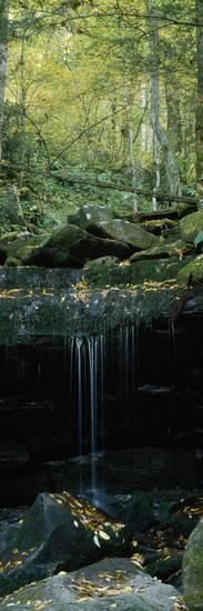 Waterfall in a Forest, Great Smoky Mountains National Park, North Carolina, USA Photographic Print by Panoramic Images at AllPosters.com
