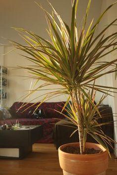 plante d polluante plante verte d 39 int rieur d polluante plante fleurie d 39 int rieur plante d. Black Bedroom Furniture Sets. Home Design Ideas