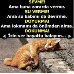 Happy Animals, Cats, Gatos, Cat, Kitty, Kitty Cats