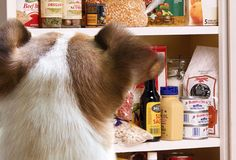 Hound Advice: 10 'Human' Foods Healthy For Dogs
