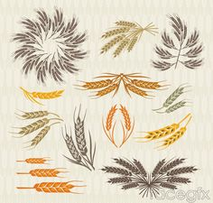 12 color wheat design vector