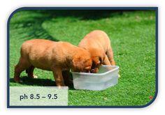 Drinkwater voor huisdieren. Verminderd de geur van vacht, mond en urine. Dikwijls ook een positief effect op de vacht: meer blinkend. www.waterisvoeding.be #kangenwater #alkalisch #enagic