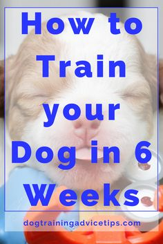 How to Train your Dog in 6 Weeks   Dog Training Tips   Dog Obedience Training   Dog Training Ideas   http://www.dogtrainingadvicetips.com/how-to-train-your-dog-in-6-weeks-2