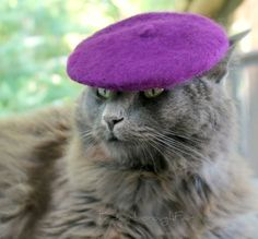 Omg @Nicole Ellsworth or @Katie Brennan Johnson, one of you needs a cat so that we can make it wear a beret. Haha.