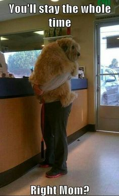 I feel like this is how owners feel when they drop off their pets... so sweet  Please don't leave me here