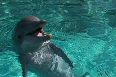 Dolphin, Sea World, Florida this one of the dolphins I got to feed!!!! Such and awesome experience ;) I loved it