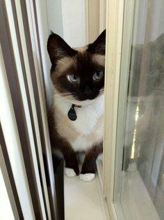Cat's eye the beatiful