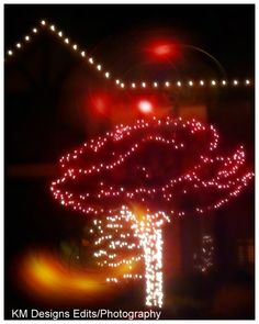 http://serenitylandscapelightingmo.com/ https://www.facebook.com/pages/Serenity-Landscape-Lighting/834335066592933