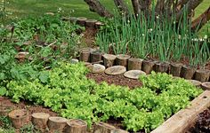 "A herborista Silvia Jeha, do Viveiro Sabor da Fazenda, conta que cada espécie tem crescimento e necessidades diferentes. ""A alface, por exemplo, precisa de 20 cm de distância entre cada muda"" (Hortas   Garden)"