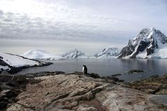 21 Stunning Pictures of Antarctica - Chinstrap penguin dwarfed by Antarctic Ice, Nori Jemil
