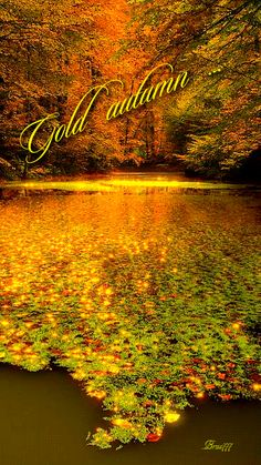 Золотая осень - анимация на телефон №1276116