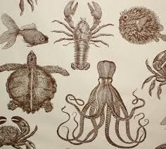 Image result for sea coral prints