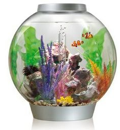 The Best Looking Aquarium On The Market…small starter saltwater setup