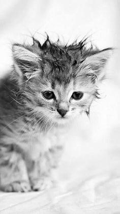 Cats W & B : Photo - Adorable kitten (hva)
