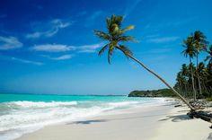Palmier penché en bordure de mer