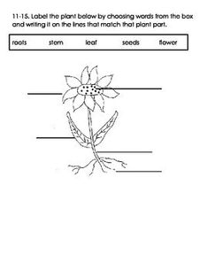 Photosynthesis Worksheets For Elementary Classrooms | pin 4 school ...