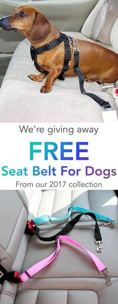 FREE Dog Seat Belt for Car
