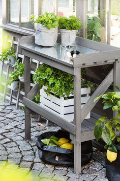 Pflanztisch mit praktischem Arbeitsbereich und guter Lagerung. Grau glasierte Kiefer mit robuster abnehmbaren Tischplatte aus verzinktem Stahl. Perfekt für den eigenen Gemüste- oder Kräutergarten zu Hause.
