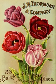 J.M. Thorburn & Co.'s annual descriptive catalogue of flower seeds :.  New York :J.M. Thorburn & Co..
