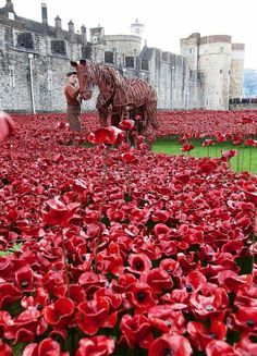 Warhorse in Poppy field