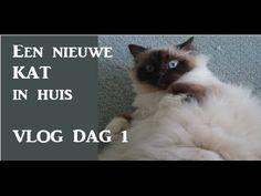 KATTEN | Nieuwe kat in huis VLOG DAG 1