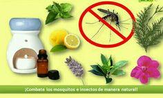 Aromaterapia y mosquitos