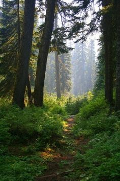 Forest walk   by unknown ~ { forest }