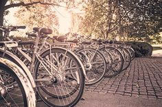 Picture by Ryan McGuire.  Gratisography.   bikes, many bikes, trees, sunlight