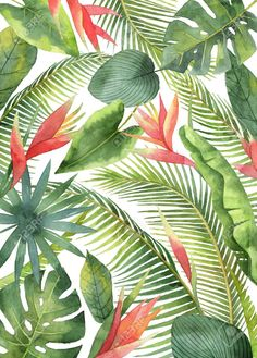 Picture of Watercolor card with tropical flowers and leaves isolated on white background. stock photo, images and stock photography. Motif Tropical, Tropical Pattern, Tropical Art, Tropical Leaves, Tropical Flowers, Watercolor Wallpaper, Watercolor Leaves, Watercolor Cards, Watercolor Illustration