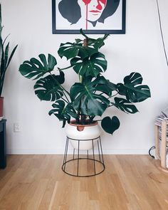 POT PROBLEM! I really like my monstera in this pot. But when I looked closer it have started to crack and shatter in the edges all the way around. @ikeasverige If you want to make a self watering pot make sure it wont disintegrate in water!