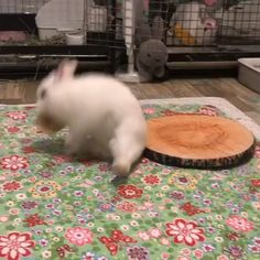 Cute Baby Bunnies, Baby Animals Super Cute, Cute Little Animals, Cute Funny Animals, Pet Bunny Rabbits, Pet Rabbit, Rabbit Jokes, Bunny Bunny, Bunny Toys