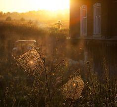 """""""..miss you, Summer!"""" by Elena Shumilova."""