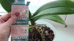 В любой аптеке буквально за копейки продаётся средство, которое превратит ваш сад в мечту! Называется оно янтарная кислота. Янтарную кислоту принимают внутрь как лекарственное средство, используют в промышленности,...