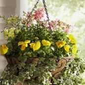 How to plant a hanging wire basket
